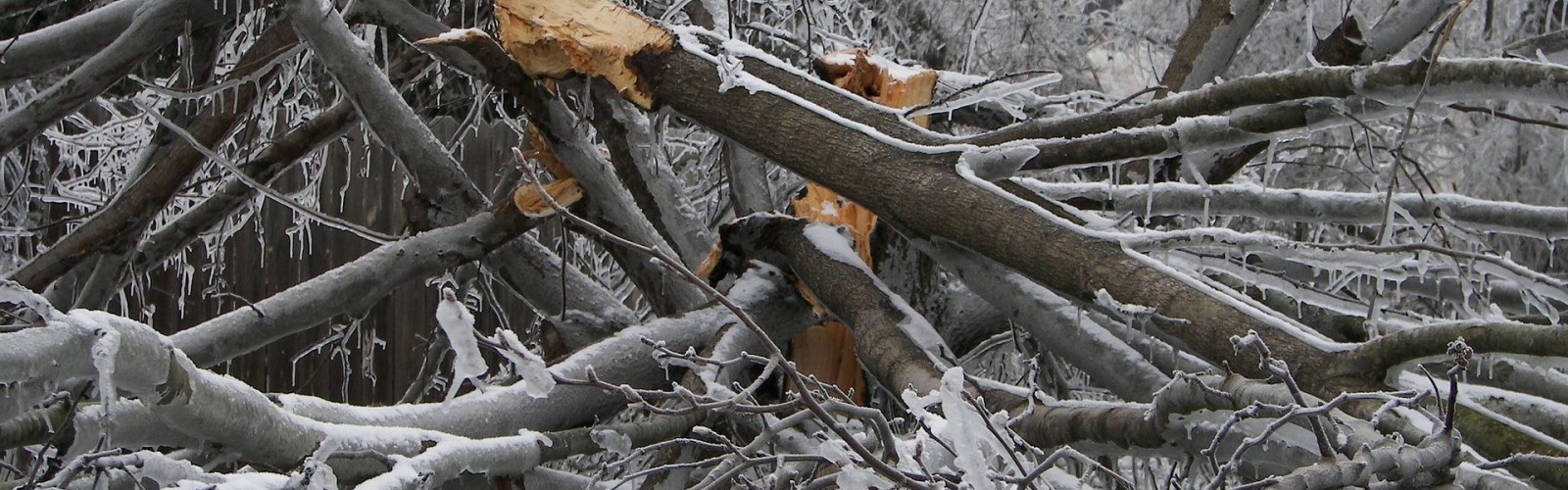 Picture of tree branches destroyed by an ice storm