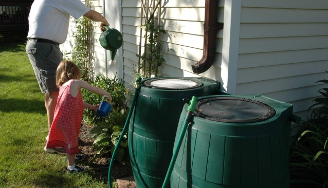 girl using watering can filled from rain barrel to water plants
